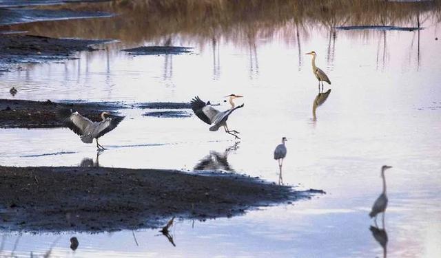 穆棱河畔,鸟类天堂