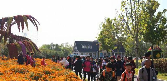 泰山天颐湖景区推出免费游花海活动,现场人气火爆