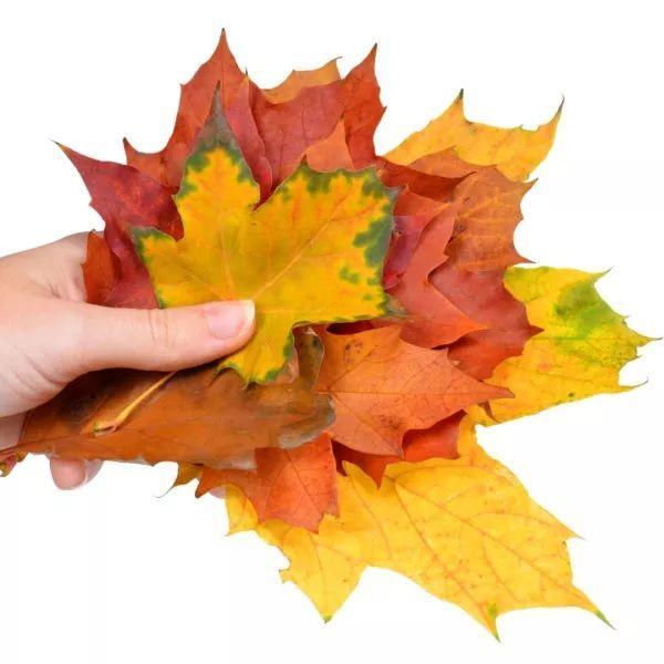 叶子造型的粘土胸针图片-编织乐论坛
