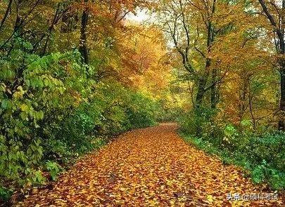 关于秋天的30首古诗词,领略古人笔下的秋意之美,为孩子收藏好
