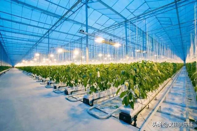 中国未来农业发展前景分析:五大趋势蕴含无限潜力