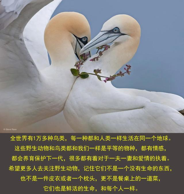 大师评图VOL.101 | 真爱如鸟