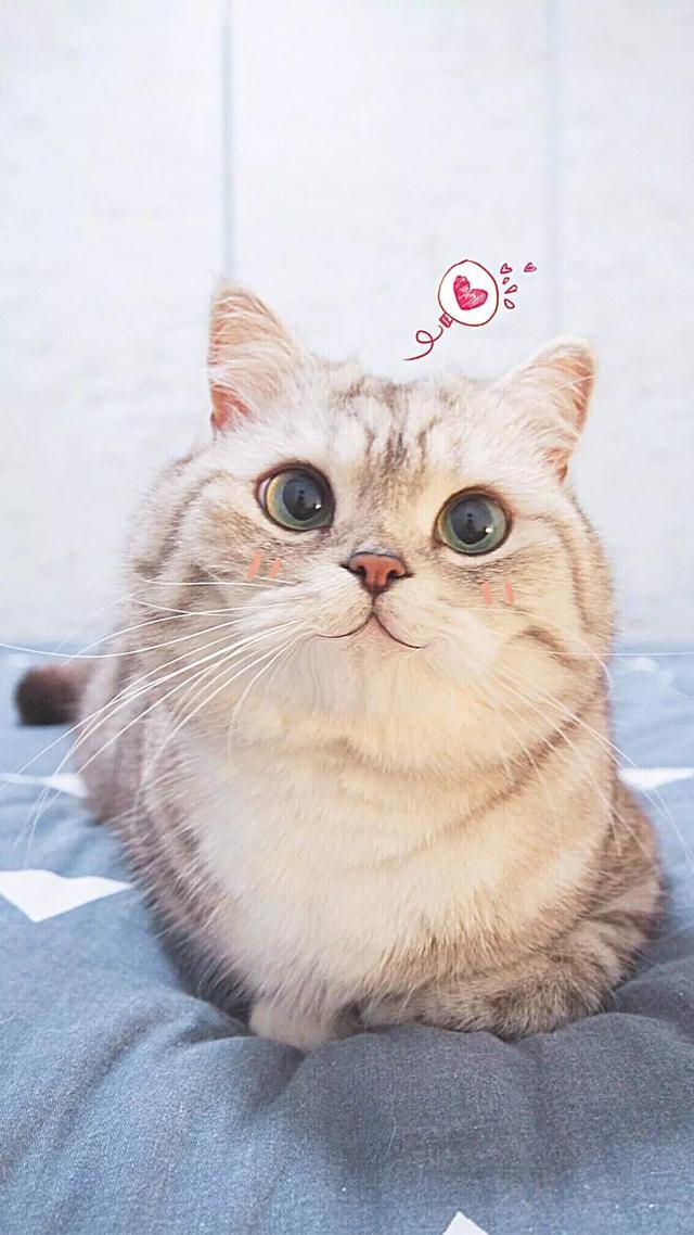 可爱小猫图片大全超萌