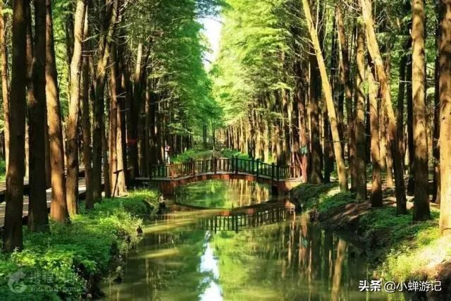 天然氧吧,大兴化李中水上森林景区,您身边的世外桃源