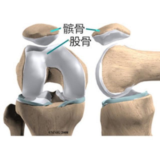 下肢肌肉解剖图