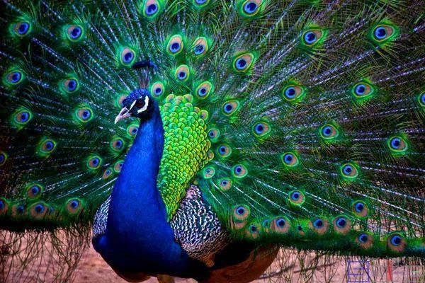 世界顶级鸟类摄影作品