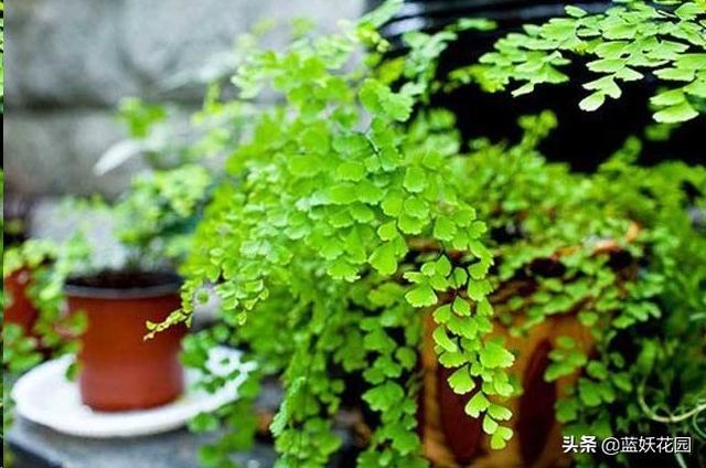 15种室内开花植物大集合,谁不想在家里养些有花朵的盆栽?