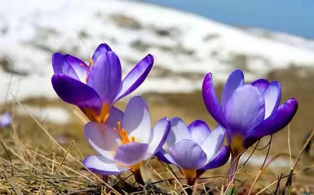 春天看图写话图片