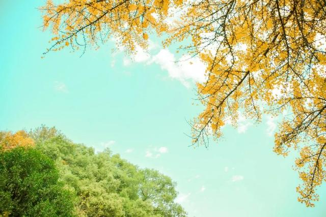 山光水色图片