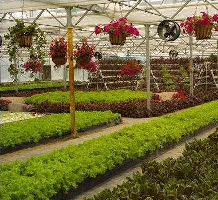 用PC阳光板来建造蔬菜大棚的优势