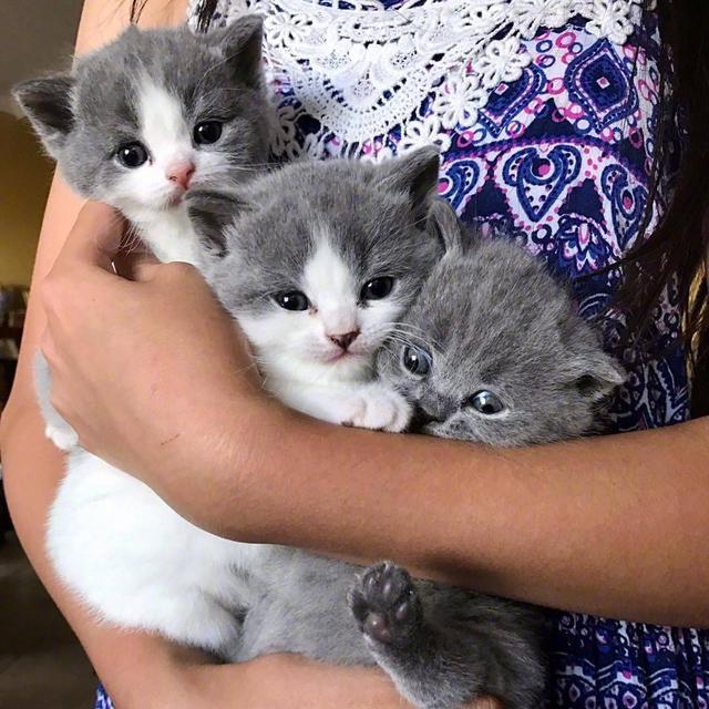 「小奶猫头像」最萌不过小奶猫 ???魔方甜点壁纸