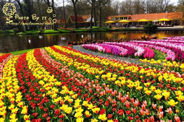 春天的圖畫圖片