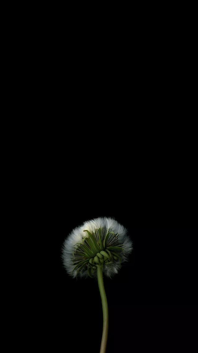 手机壁纸花朵满屏唯美