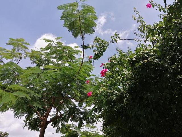 盛夏时节,南宁这条网红路披上彩妆,红绿相间美如画