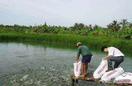 淡水肉食性鱼类有哪些 我国有什么贵价的淡水鱼类?无... _飞扬123