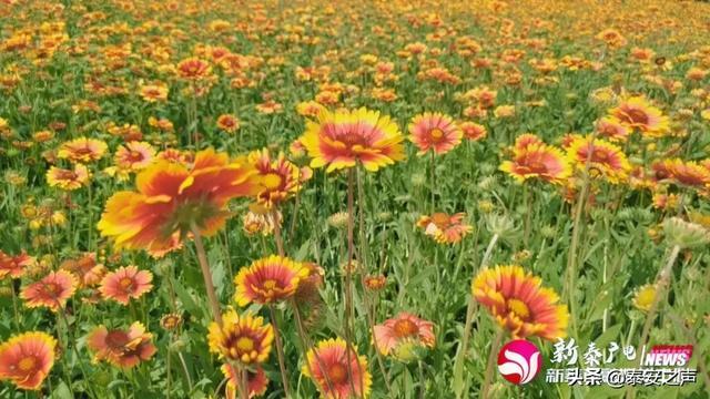 春节开的花卉大全大图