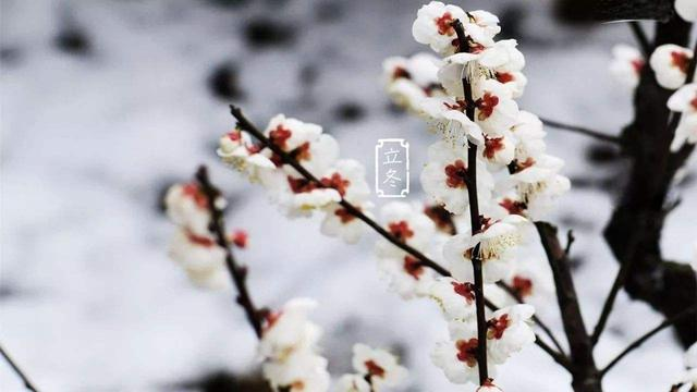 立冬图片大全大图唯美