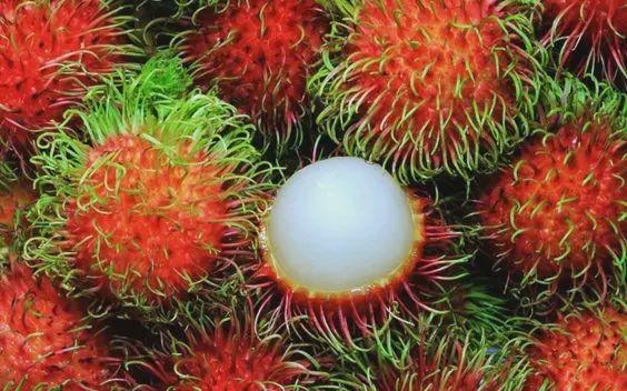这9种水果,你能叫上名字的有几个吗?