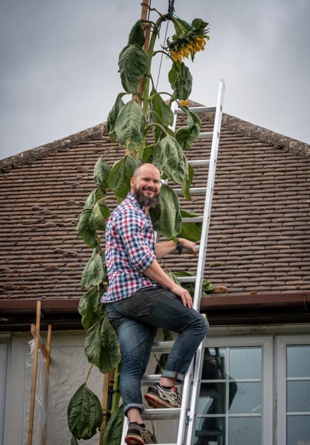 童梦成真!英男孩许愿超高向日葵,父亲悉心浇灌竟种得比房子还高