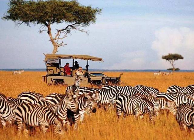 肯尼亚旅游局中文官方网站