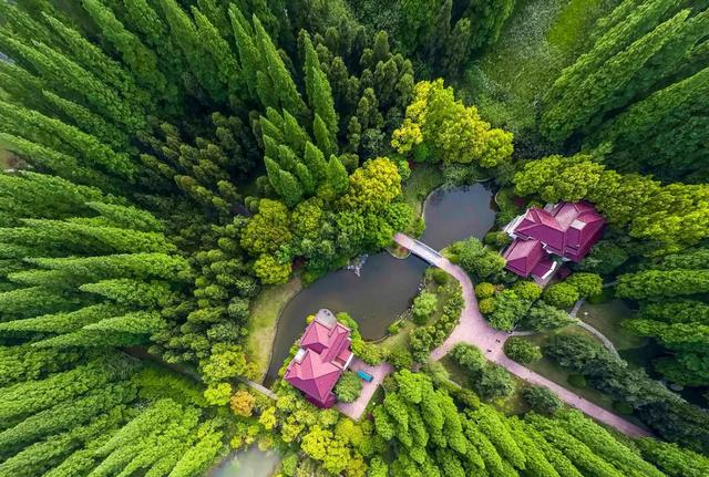 陈村元素闪耀世界园艺博览会,陈村花卉企业为世园会提供1000多种花卉