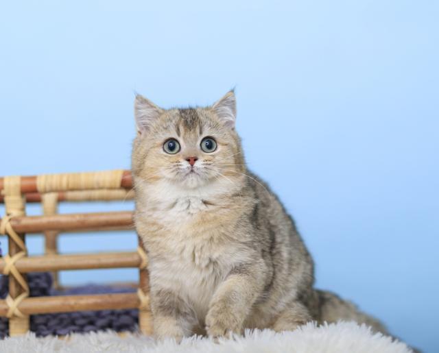 十个表现告诉你猫咪生病了|-波奇网百科大全