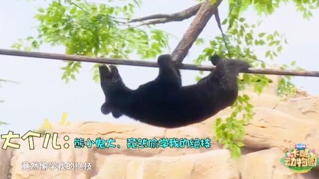 大黑熊拜手动图