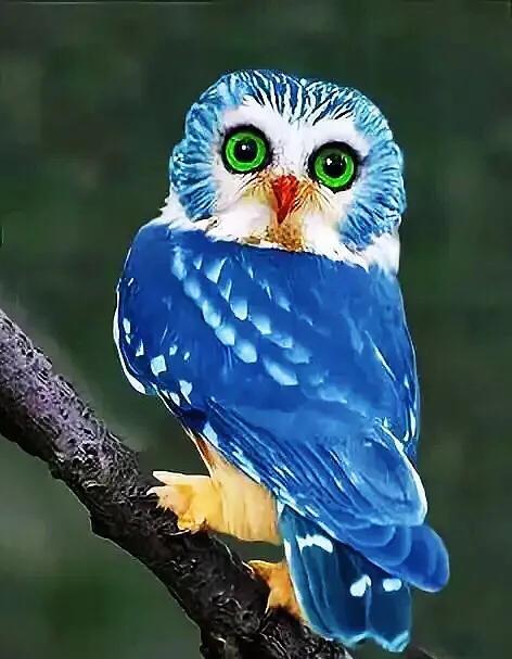 手机壁纸|夜间猛禽猫头鹰高清图片