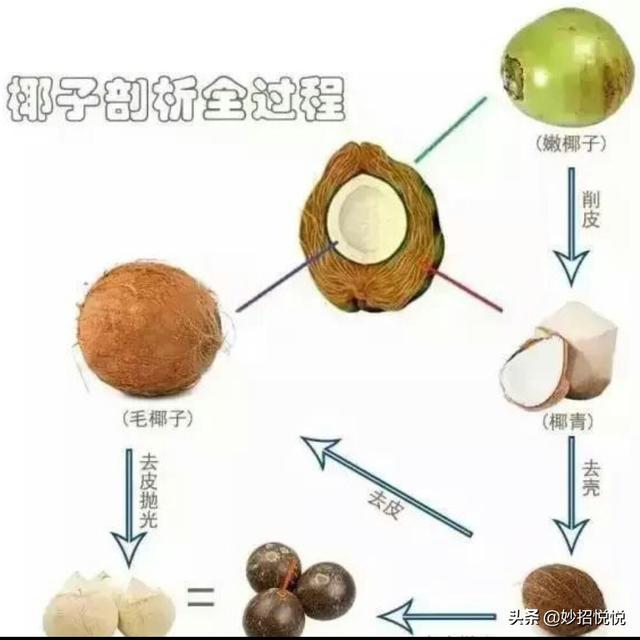 取椰肉有诀窍,看看几十年的老椰农他们怎么做?这招让我涨见识了