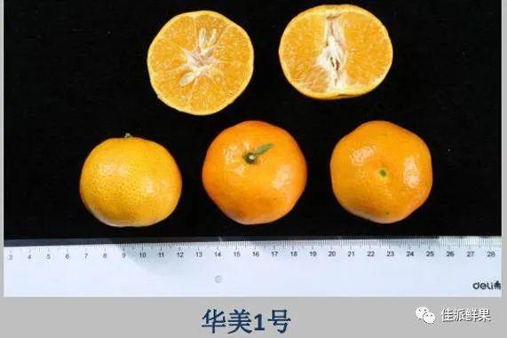 中柑所华美系列柑橘品种介绍