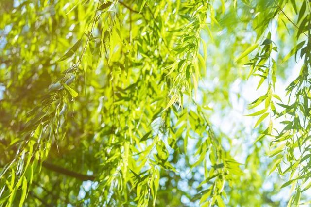 关于植树节有哪些