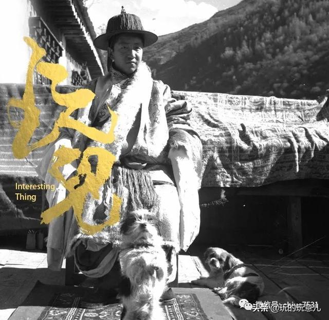 西藏猎犬幼犬的样子