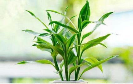 植物花语大全:各种植物的花语、盆栽、多肉植物花语等-第一星座网