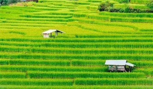 2020年农业行业的发展趋势及未来农业的前景分析