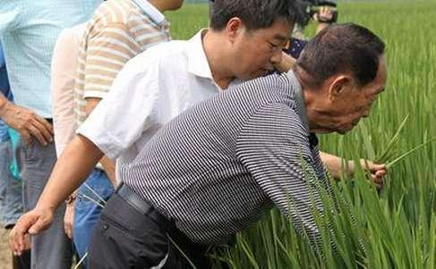 袁隆平差点当空军 还好没有当上空军,不然就少一个水稻之父了!