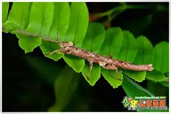 昆蟲畫報圖片大全