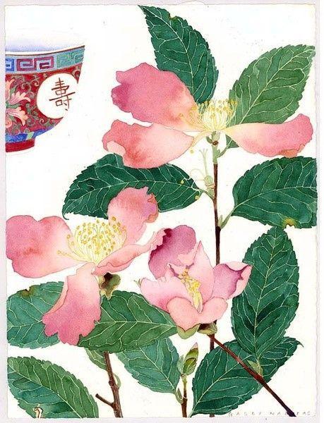 手绘水生植物莲花图欣赏
