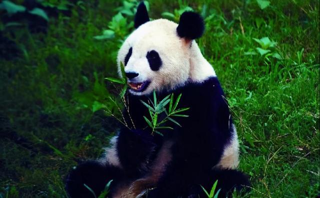 熊猫头三炷香搞笑图