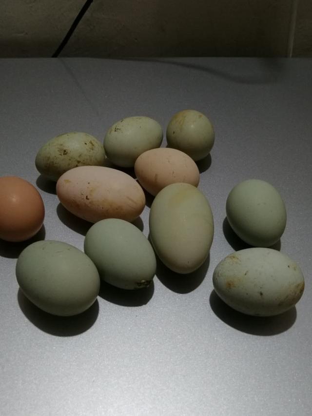 小鸡怎么画简笔画
