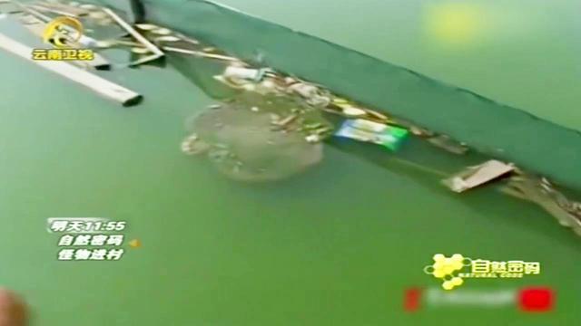 一行人发现了一个体型庞大的水怪,长达一米二,估计约有一百多斤