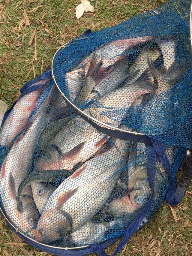 选钓位做到这几点,冬钓不难秋天河道草鱼钓鱼技巧