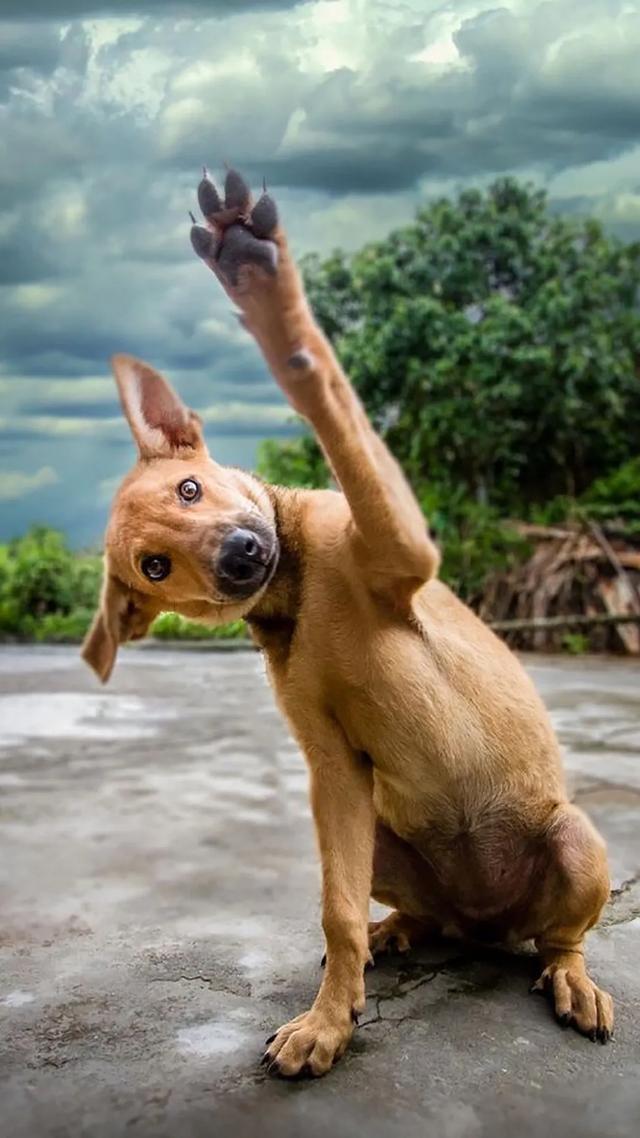狗狗手机壁纸