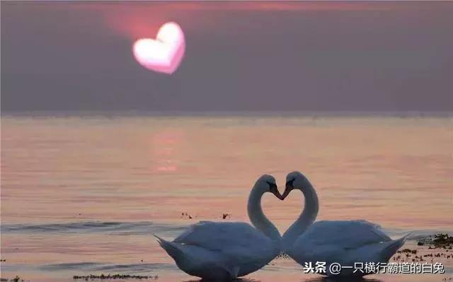关于爱情的名言_搜宝名言
