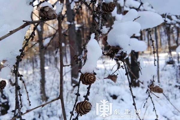 【走进黑龙江】伊春朗乡林中园原始森林公园雪景_平... _新浪博客