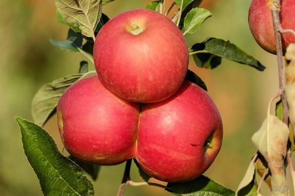 细数吃水果的利弊
