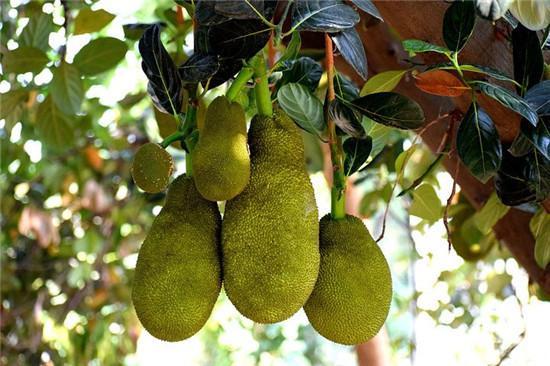 血糖高的人吃什么水果好 这6种水果有效降血糖 - 疾病预防 - ...