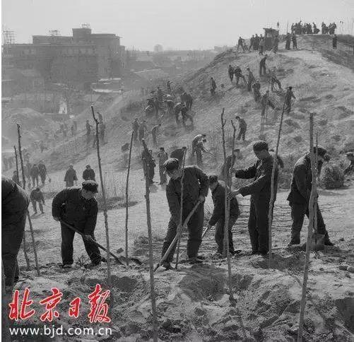北京牡丹园公园秘密