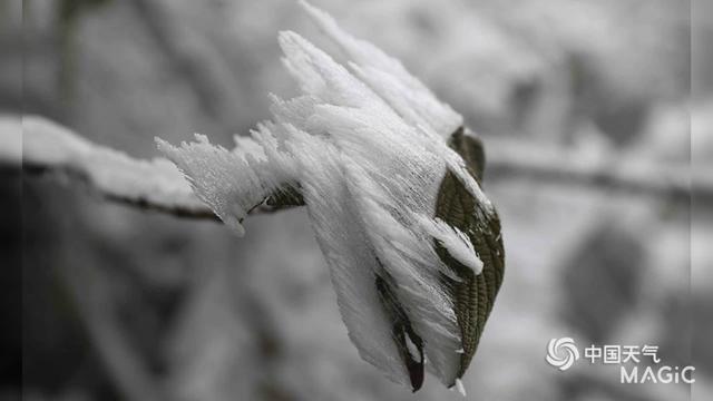八面山自然保护区-吉安市井冈山市八面山自然保护区旅游指南