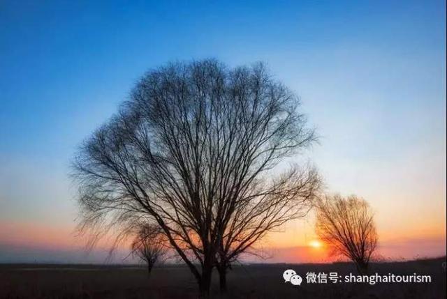 上海十大最美湿地都在这里,来看魔都自然风光!