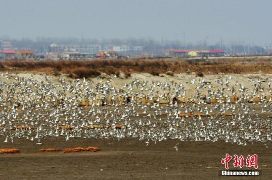 青海湖景区照片